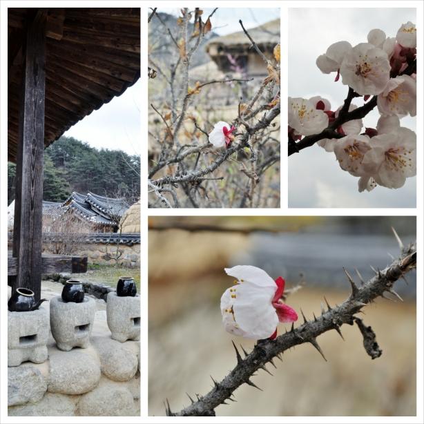 New Cherry Blossom